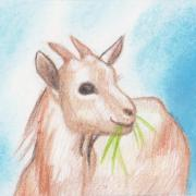 рисунок козы