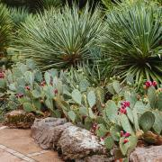 Никитский ботанический сад (Ялта).