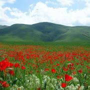 Весна на Тянь-Шане