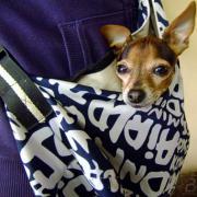 Маленькая собачка в сумочке