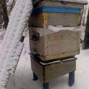 Зимняя пасека